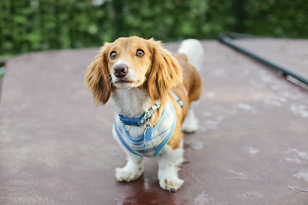 © Shutter Hound  Pet Photography | Daily Dog Tag |  On Location Lifestyle Dog Photography