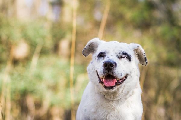 Photo by www.marymaier.com | Daily  Dog Tag | adoptable-dog-BARK-VA http://www.barkva.org/PetList.aspx