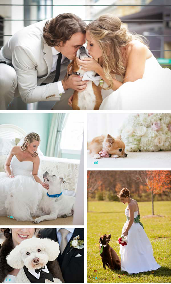 Best Dog In a Wedding Nominees | Daily Dog Tag |  bride, groom and dog