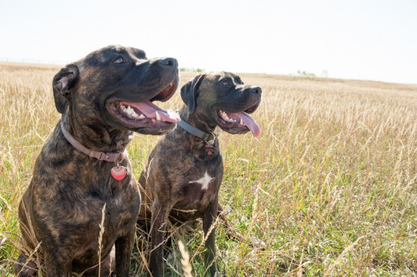Happy Tails:  Dula and Plute