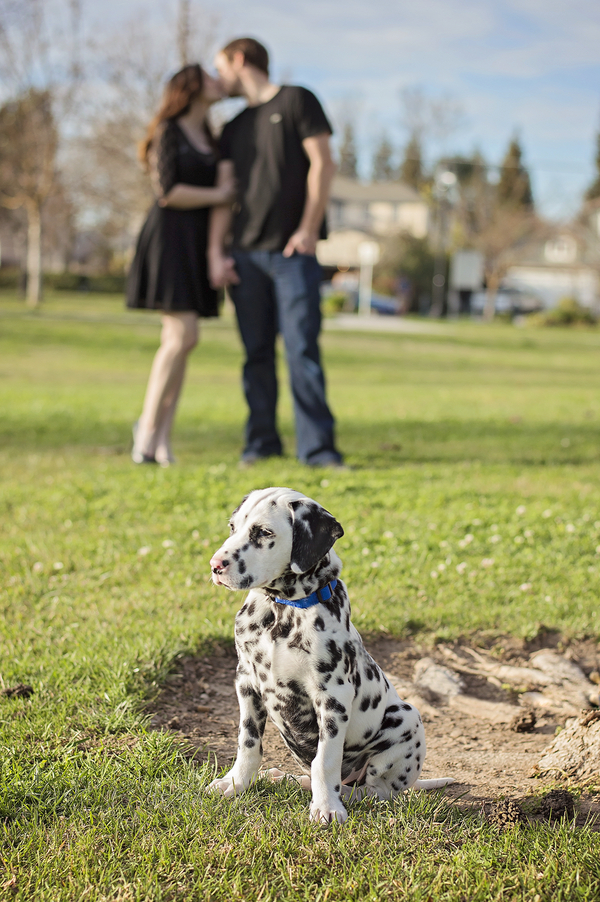 © Brianna Noelle Photography | Daily Dog Tag | Dalmatian-Puppy-and-couple