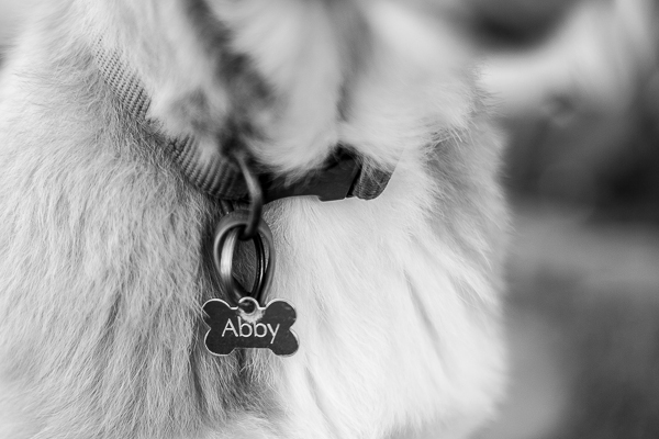 Pup & Co | Daily Dog Tag | awesome-dog-tag