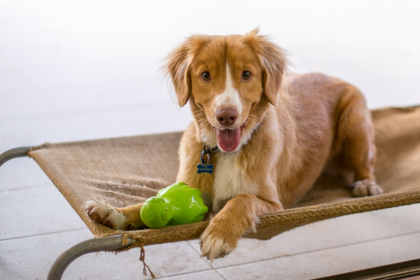Pup & Co | Daily Dog Tag | Young-Toller