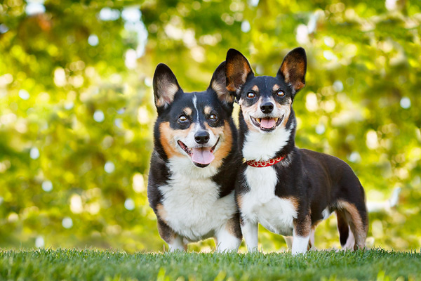 Happy Tails: Gizmo and Harrison - Daily Dog TagDaily Dog Tag  Happy Tails: Gi...