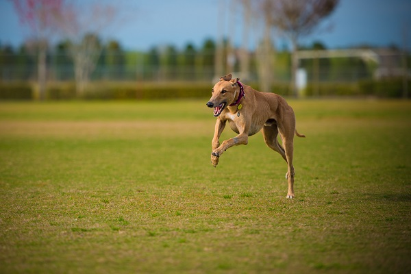 © Lupine Lens Photography | Daily Dog Tag | Lifestyle Pet Photographer