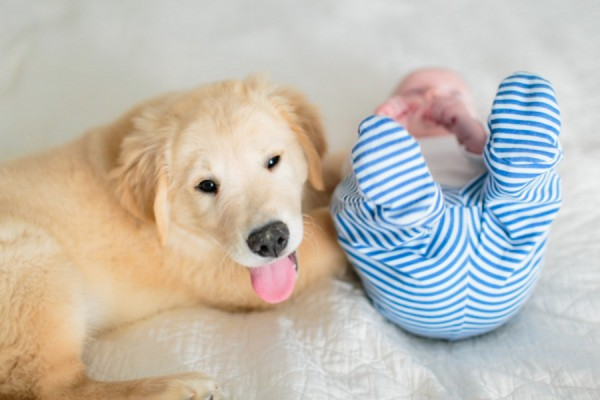 © Melissa Arlena Pet Photography | Daily Dog Tag | puppy-baby-first-year