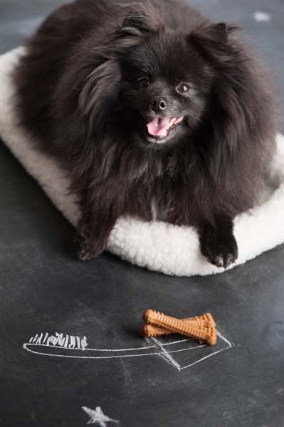 Dog Training Syracuse