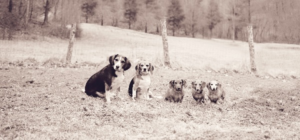 © Sweet Rocket Photography  | Daily Dog Tag | Ginger and her canine family