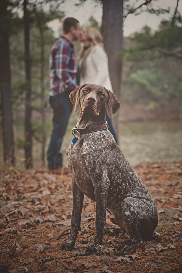 handsome Short haired griffon, engagement photos in the woods