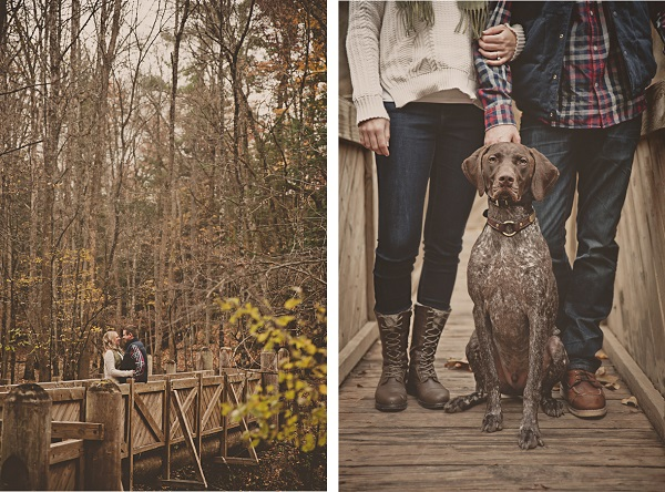 © Patrick Hadley Photography   Daily Dog Tag   Handsome-German-Shorthaired-Pointer