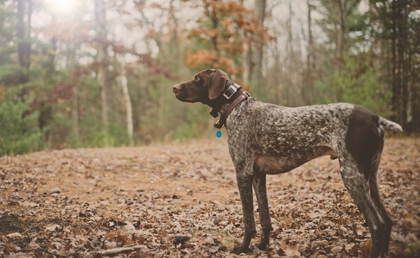 © Patrick Hadley Photography  | Daily Dog Tag | On-location-dog-photography-in-forest