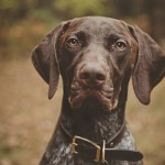 Patrick Hadley-pet-photography