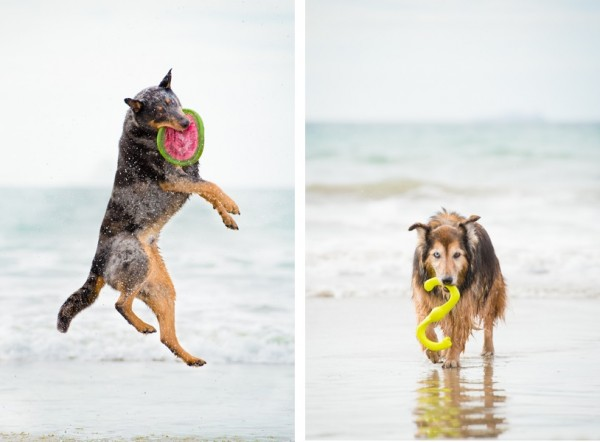 © Westway Studio| Daily Dog Tag | Beach-Dogs