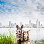 © Westway Studio | Coronado Island Dog Photography