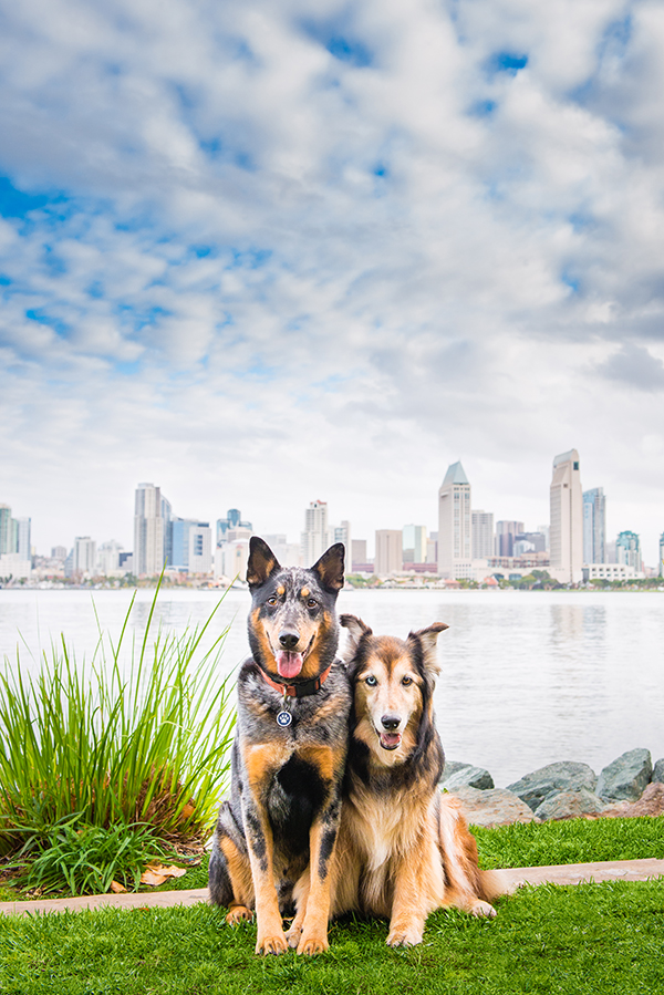 © Westway Studio | Daily Dog Tag | Modern-on-location-dog-photography