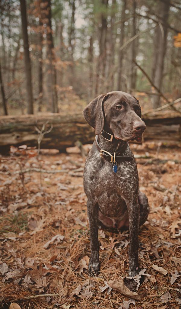© Patrick Hadley Photography | Lifestyle-Dog-Photography
