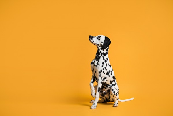 © Chewbone Studio  | Daily Dog Tag | Dog-photography-in-studio