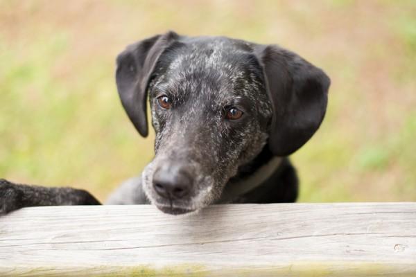 © Elizabeth Henson Photos | Daily Dog Tag | VA-Beach-lifestyle-pet-photographer
