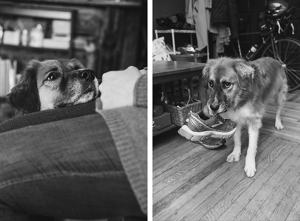 © Jenny Karlsson Photography   Daily Dog Tag   in home dog photography
