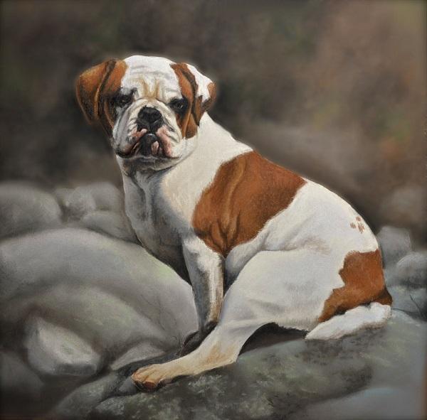 © Imagine Art by Jenna Wilkes   Daily Dog Tag   English Bulldog