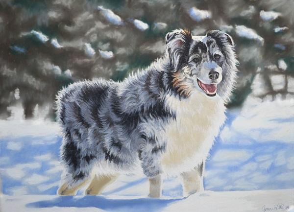 © Imagine Art by Jenna Wilkes   Daily Dog Tag   custom-dog-portraits