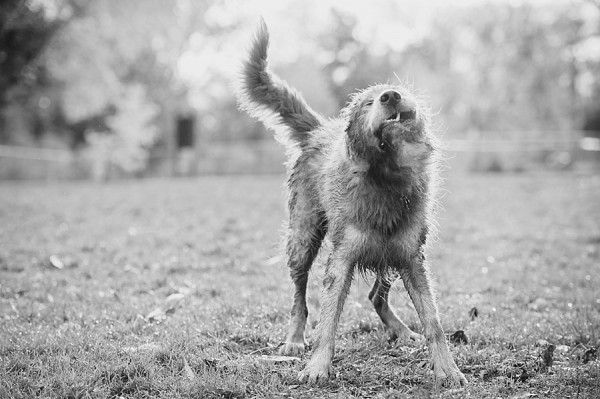 © Jenny Karlsson Photography | Daily Dog Tag | Frick Park dog photographer