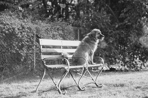 © Jenny Karlsson Photography | Daily Dog Tag | dog sitting on park bench