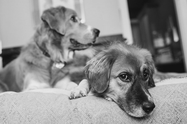 © Jenny Karlsson Photography   Daily Dog Tag   black and white dog portraits