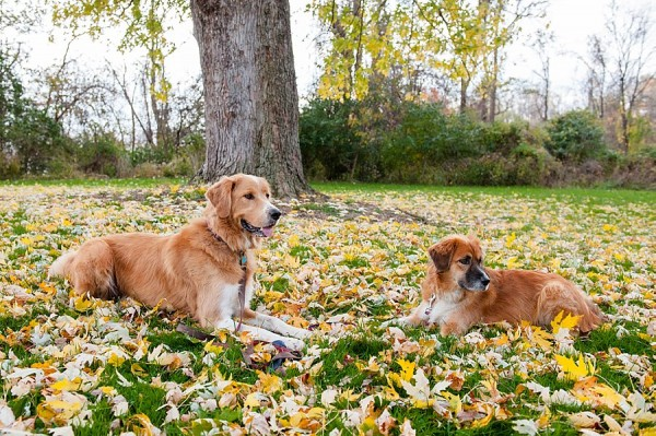 © Jenny Karlsson Photography | Daily Dog Tag | Dogs at Frick Park