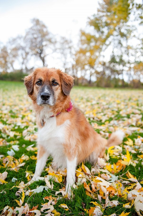 © Jenny Karlsson Photography | Daily Dog Tag | mixed breed at park