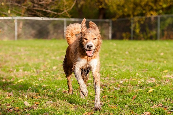 © Jenny Karlsson Photography   Daily Dog Tag   On location dog photography