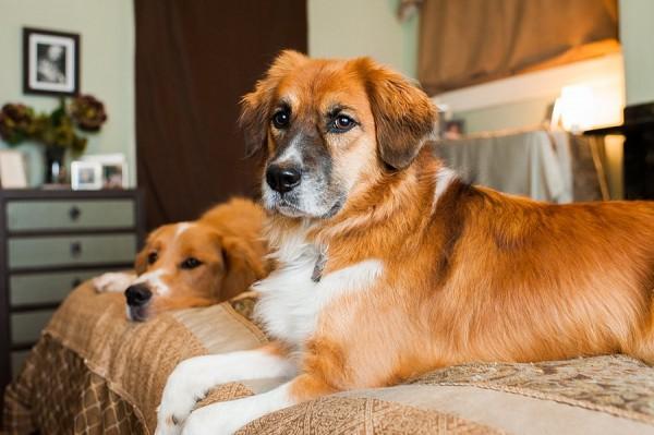 © Jenny Karlsson Photography   Daily Dog Tag   dog bffs
