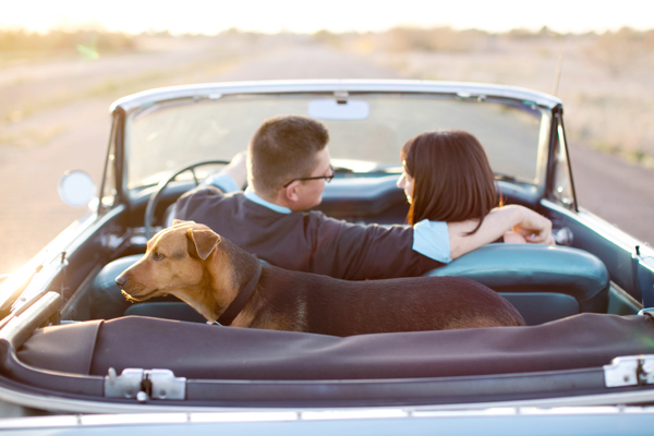 © Melissa Jill Photography | Daily Dog Tag | mixed-breed-rescue and family, AZ-family-portraits