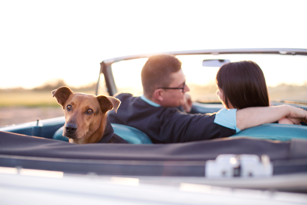 © Melissa Jill Photography | Daily Dog Tag | dog-in-Ford-Falcon-convertible