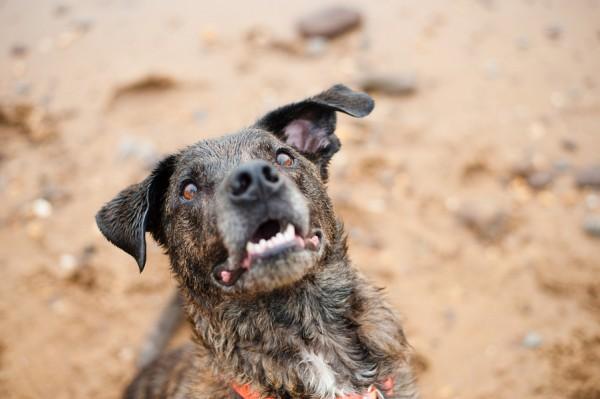 © Tiltawhirl Imagery | Daily Dog Tag | Vibrant-Fun-Dog-Photography