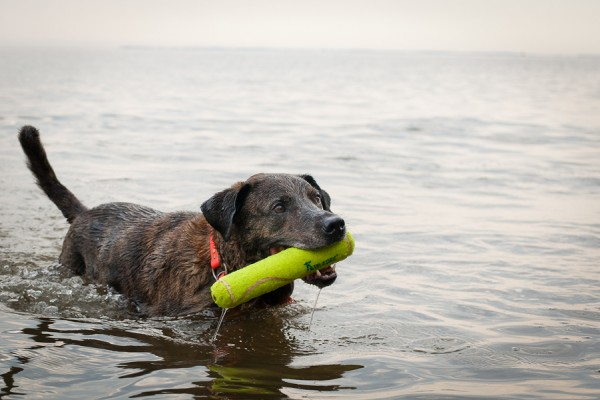 © Tiltawhirl Imagery | Daily Dog Tag |Dog-fetching-in-water