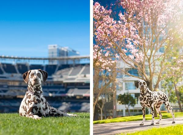 © Westway Studio | Daily Dog Tag | San Diego-Pet-Photography