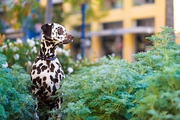 © Westway Studio | Daily Dog Tag | San-Diego-Lifestyle-Dog-Photography