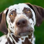 gorgeous-dog-photography