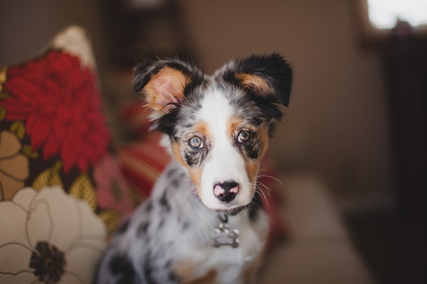 © Moondance Photography | Daily Dog Tag | sweet-puppy-photography
