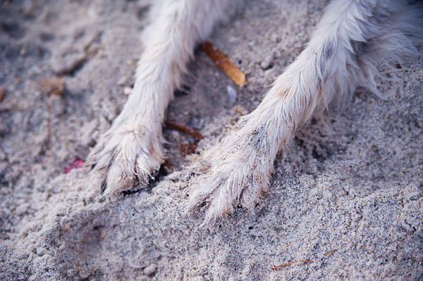 © Emilee Fuss Photography | Daily Dog Tag |Lifestyle-Pet-Photography
