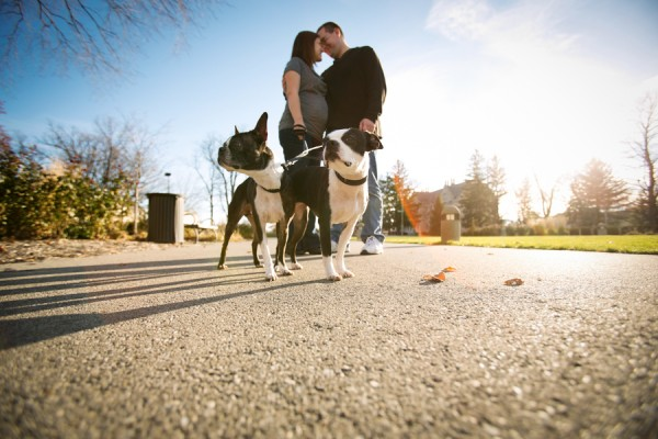 j.ro photography | Daily Dog Tag |  maternity-shoot and Boston-Terriers