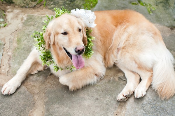© Cariad Photography/Laura Parente | Daily Dog Tag |Wedding Dog