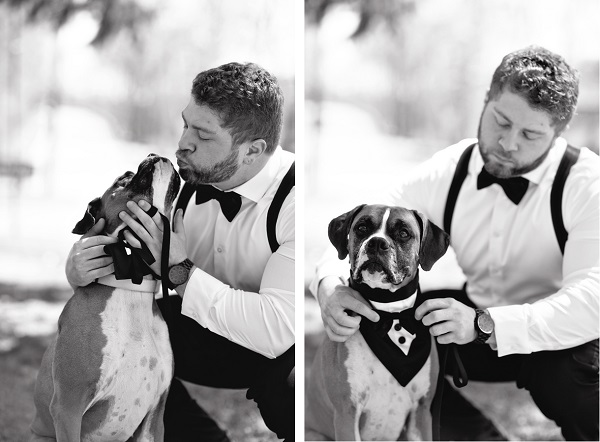 © Custom Portraits by Charlene | Daily Dog Tag |  groom-and-Boxer-