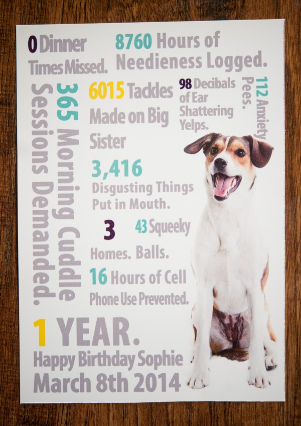 © Joe R Geske Photography | Daily Dog Tag | dog's-first-year-by-the-numbers