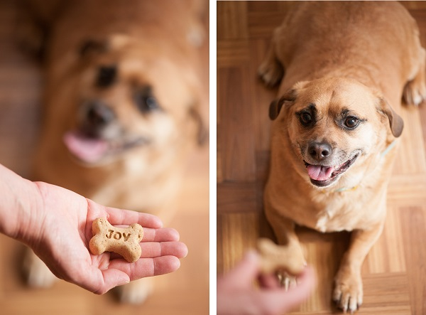The Daily Dog Tag