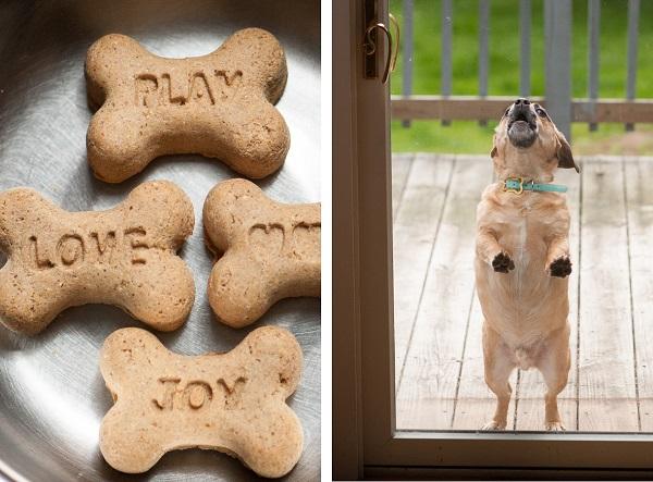 © Daily Dog Tag | Hill's Treats and Puggle