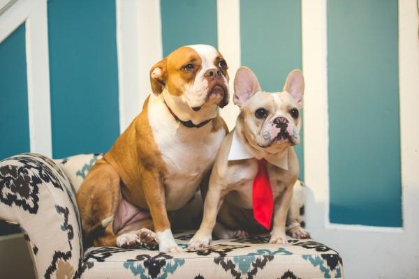 © BG Productions | Daily Dog Tag | Dog-BFFs