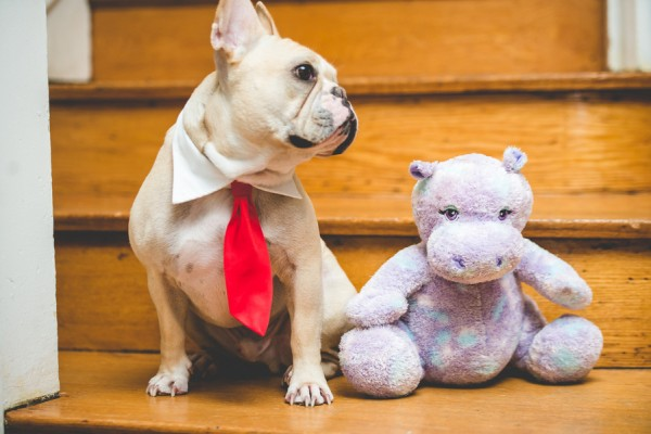 © BG Productions | Daily Dog Tag | French Bulldog on steps