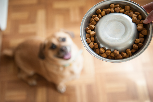 Hill's Prescription Diet Advanced Weight Solution in a dogfood bowl
